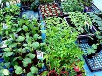 20120421_船橋市本町7_緑と花のジャンボ市_1007_DSC09442
