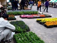 20120421_船橋市本町7_緑と花のジャンボ市_1007_DSC09439