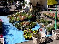 20121021_船橋市本町1_秋の緑と花のジャンボ市_1112_DSC07369