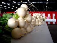 20121111_船橋市市場1_船橋中央卸売市場_農水産祭_1035_DSC01047