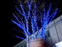 20121115_JR市川駅前_シャポー市川_クリスマス_1914_DSC01374