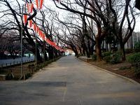 20120314_東京都台東区上野公園5_桜_花見_1705_DSC08310