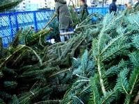 20121118_イケア船橋_モミの木クリスマスツリー_1504_DSC02299