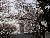 20130323_三井ガーデンホテルズ船橋ららぽーと_桜_0923_DSC06962