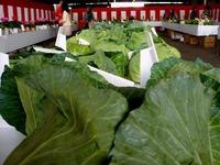 20121111_船橋市市場1_船橋中央卸売市場_農水産祭_1037_DSC01068