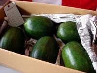 20121111_船橋市市場1_船橋中央卸売市場_農水産祭_1037_DSC01066