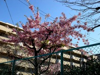 20130316_船橋市本町4_本町児童公園_桜_1432_DSC04389