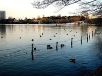 20120314_東京都台東区上野公園5_桜_花見_1649_DSC08251