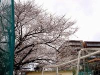 20130323_船橋市前貝塚町_塚田小学校_桜_1322_DSC07315