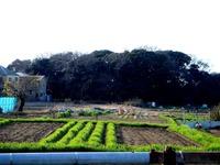20120102_習志野市鷺沼3_八剱神社_八剣神社_初詣_1438_DSC08540
