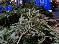 20131130_船橋市浜町2_IKEA船橋_クリスマスツリー_1635_DSC00341