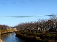 20121216_船橋市_海老川遊歩道_ジョギングロード_1130_DSC06189T