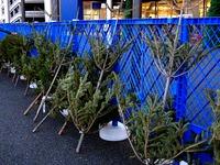 20131130_船橋市浜町2_IKEA船橋_クリスマスツリー_1634_DSC00334