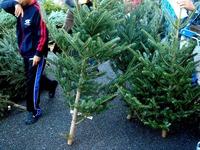 20121118_イケア船橋_モミの木クリスマスツリー_1503_DSC02285