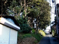 20120102_習志野市鷺沼3_八剱神社_八剣神社_初詣_1433_DSC08529