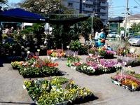 20121021_船橋市本町1_秋の緑と花のジャンボ市_1112_DSC07365