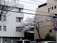20130324_船橋市市場4_慈心会青山病院_桜_1240_DSC07901T