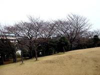 20130320_船橋市若松3_若松公園_桜_1149_DSC05975