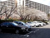 20120407_船橋市浜町2_三井ガーデンホテル_サクラ_桜_1314_DSC00310