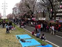 20150404_松戸市六高台の桜通り_六実桜まつり_1237_MAH00306040