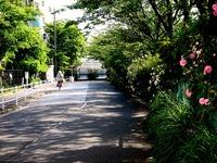 20140524_船橋市宮本9_花輪車庫脇_バラ_薔薇_1522_DSC02609