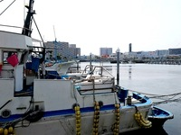 20160521_船橋漁港の朝市_船橋漁港朝市_0925_DSC00033