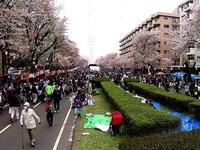 20150404_松戸市六高台の桜通り_六実桜まつり_1238_MAH00307060
