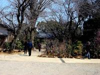 20140323_船橋市金杉6_御滝公園_御滝不動尊_桜_1259_DSC00486