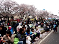 20150404_松戸市六高台の桜通り_六実桜まつり_1200_DSC08355