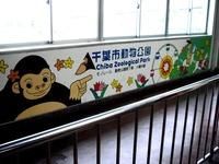 20160402_千葉市動物公園_レッサーパンダの風太くん_1248_DSC00275