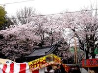 20160403_御滝不動尊さくら祭り_御瀧ソーランまつり_1200_DSC00093