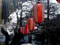 20140329_船橋市薬円台4_薬円台公園_桜_1532_DSC01493