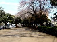 20140329_船橋市薬円台4_薬円台公園_桜_1528_DSC01453