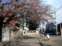 20140329_習志野市泉町1_日本大学_観桜会_1456_DSC01366