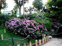 20150620_津田沼公園_キャンドルナイトinならしの_1819_DSC09371