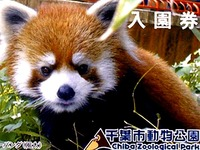20160327_千葉市動物公園_レッサーパンダの風太くん_252