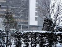 20140208_関東に大雪_千葉県船橋市南船橋地区_1458_DSC04349