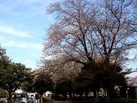 20140329_船橋市薬円台4_薬円台公園_桜_1528_DSC01454
