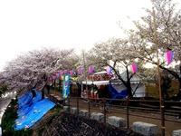 20140406_船場市_海老川ジョギングロード_花見_桜_1651_DSC03971