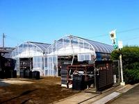 20141213_船橋市東船橋1_金子農園シクラメン小売_1051_DSC01660