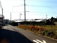 20141213_船橋市東船橋1_金子農園シクラメン小売_1050_DSC01649