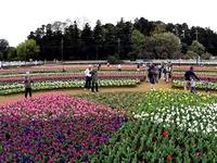 20160409_柏市あけぼの山農業公園__チューリップ_1420_DSC00704