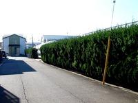 20141213_船橋市東船橋1_金子農園シクラメン小売_1051_DSC01652