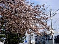 20140329_習志野市泉町1_日本大学_観桜会_1456_DSC01362