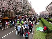 20150404_松戸市六高台の桜通り_六実桜まつり_1238_MAH00307050