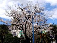 20140405_船橋市浜町2_ららぽーとTOKYO-BAY_桜_1205_DSC03790
