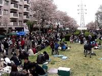 20150404_松戸市六高台の桜通り_六実桜まつり_1237_MAH00306010