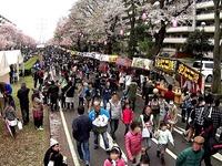 20150404_松戸市六高台の桜通り_六実桜まつり_1231_MAH00303040