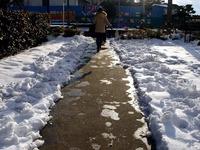 20140210_関東に大雪_千葉県船橋市南船橋地区_0745_DSC04726