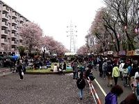 20150404_松戸市六高台の桜通り_六実桜まつり_1234_MAH00305020